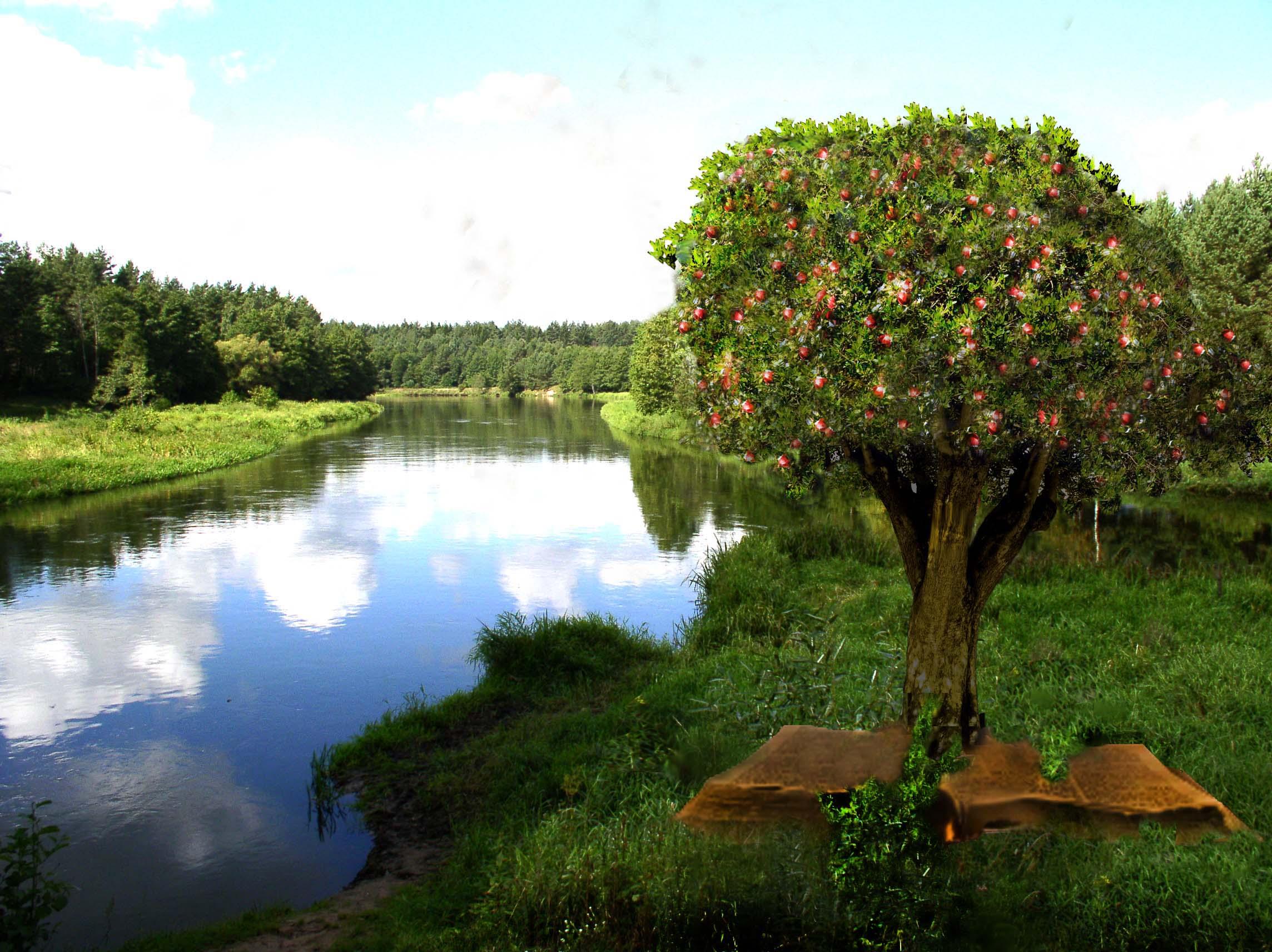 May 18th   Tree-Word-river-22